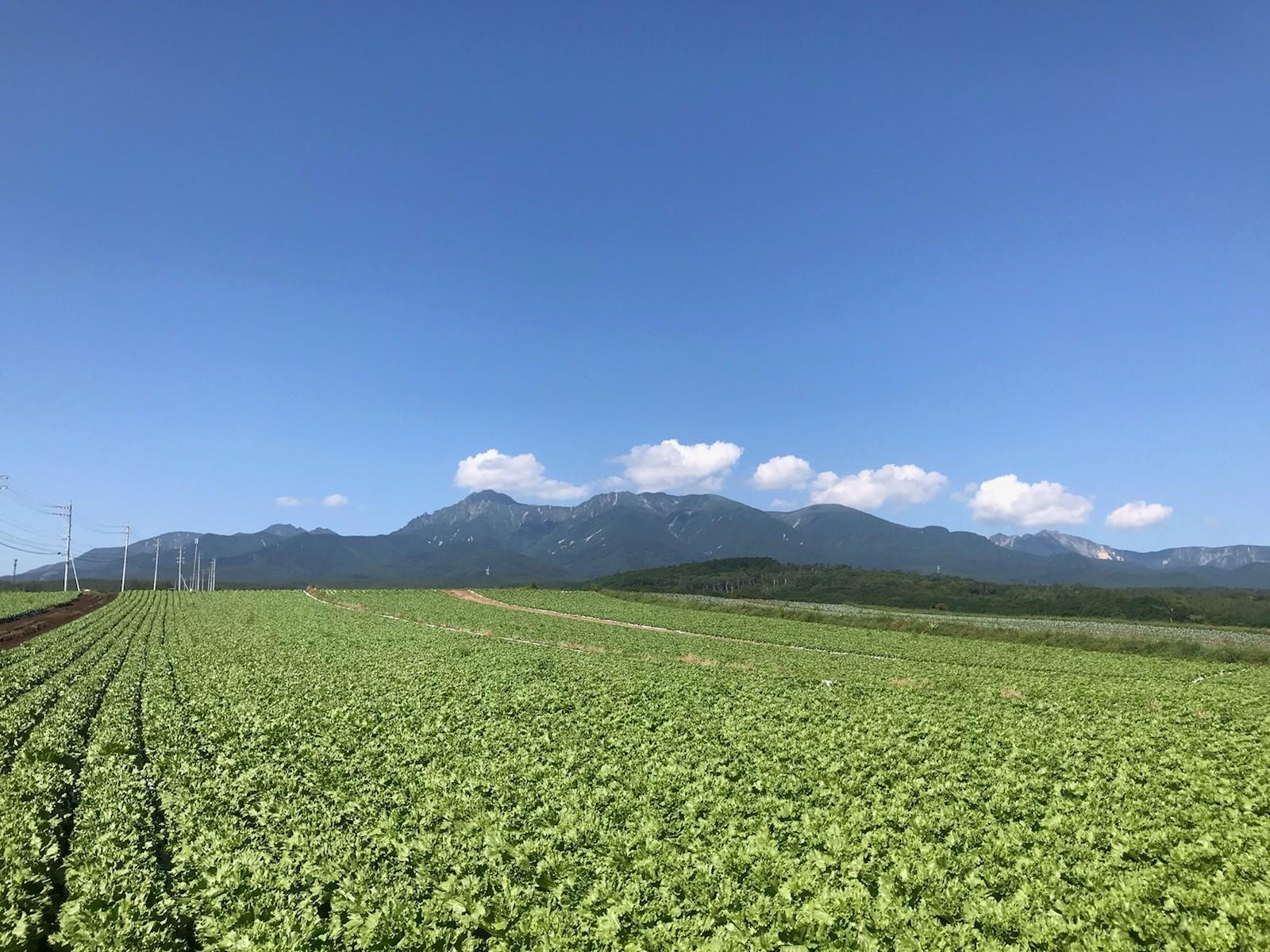 長野県(夏秋レタス)