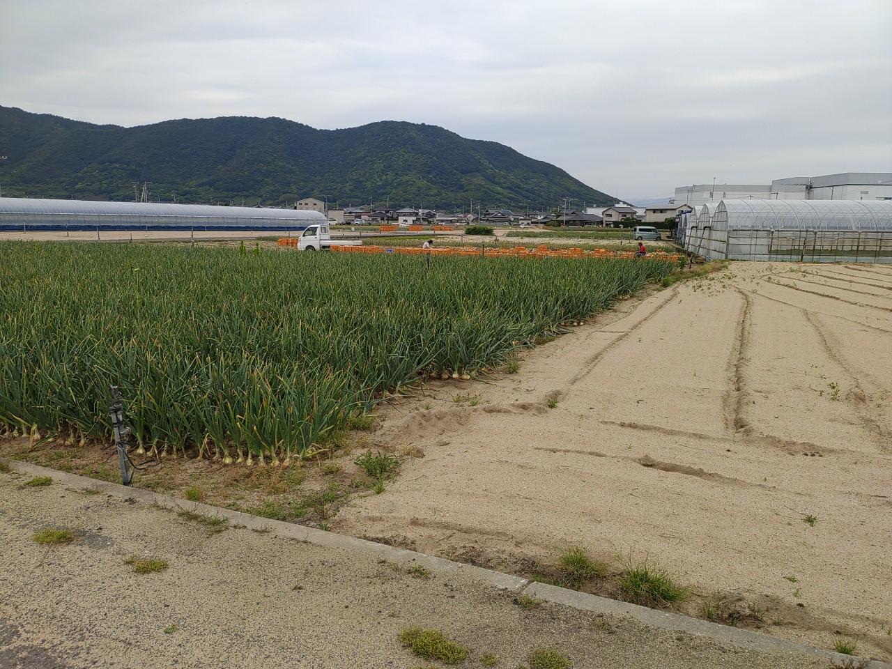 香川県(たまねぎ)
